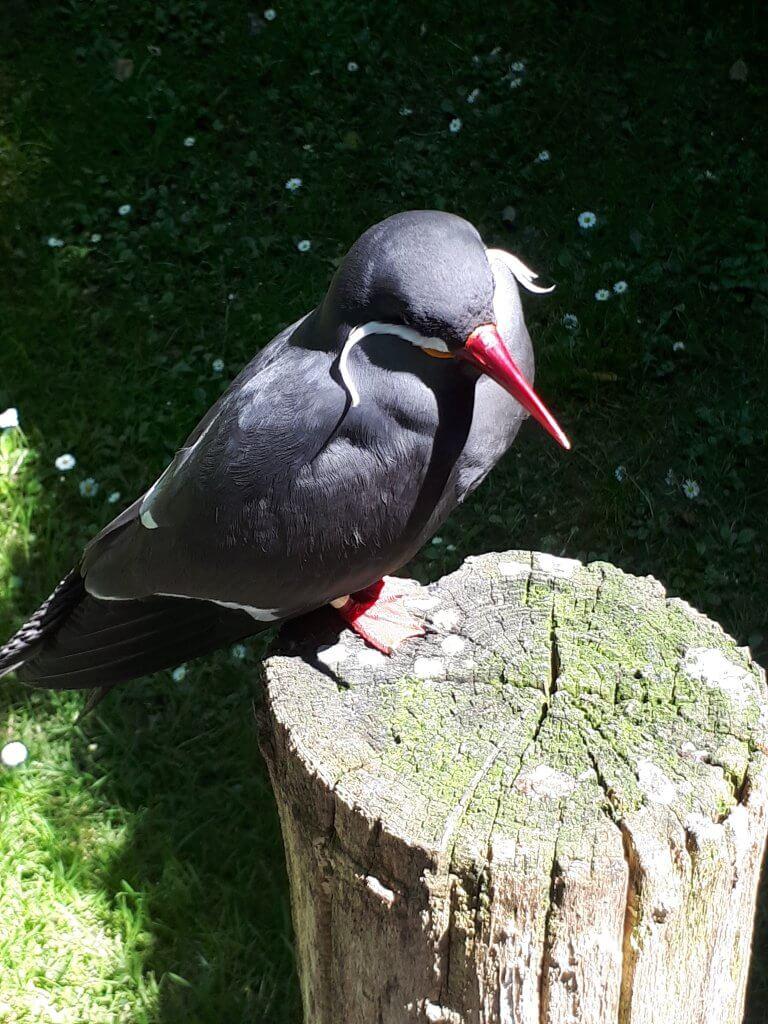 Oiseau du parc animalier d'Argelès Gazost