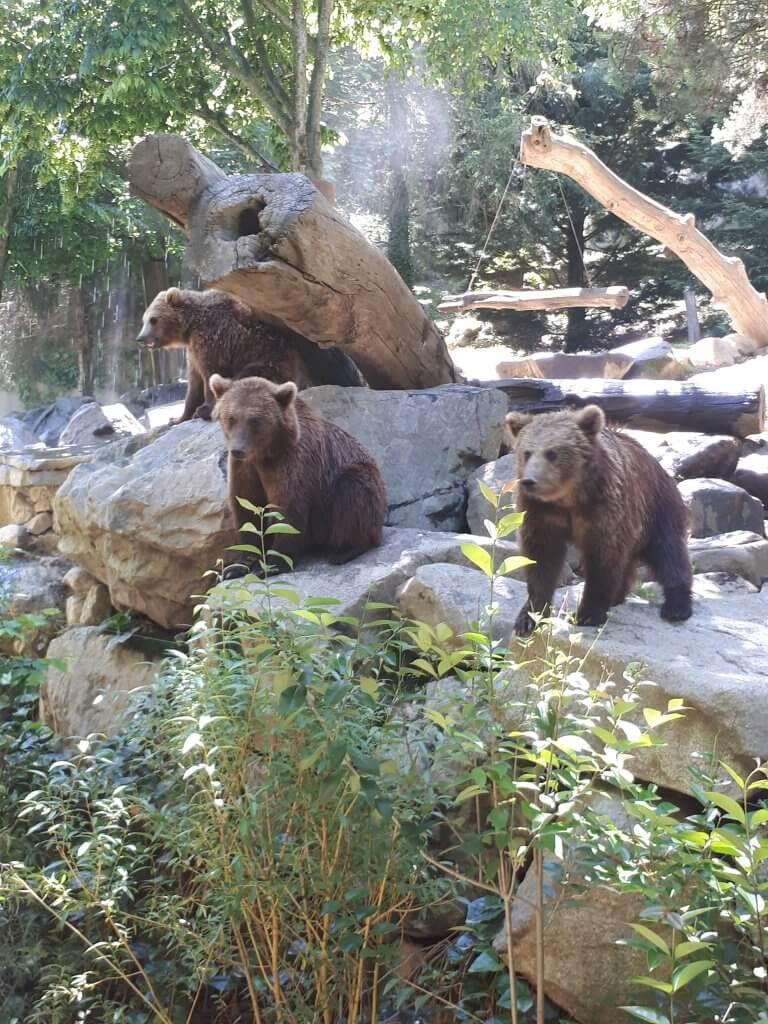 Les Ours du parc animalier d'Argelès Gazost
