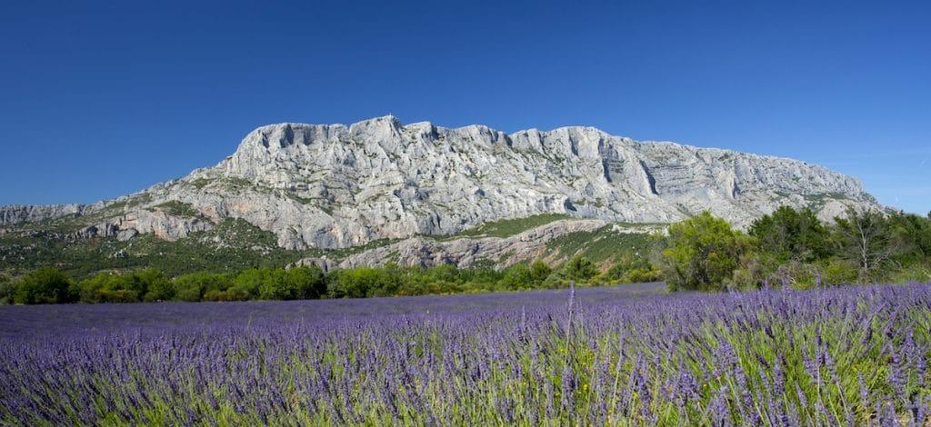 Champ de lavande planté au pied de la montagne Sainte-Victoire.