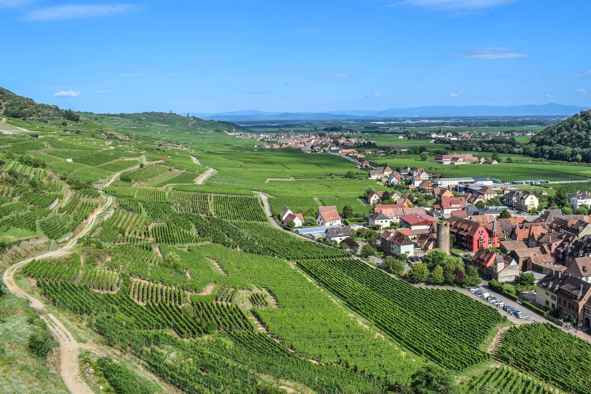 Coteaux des vins d'Alsace