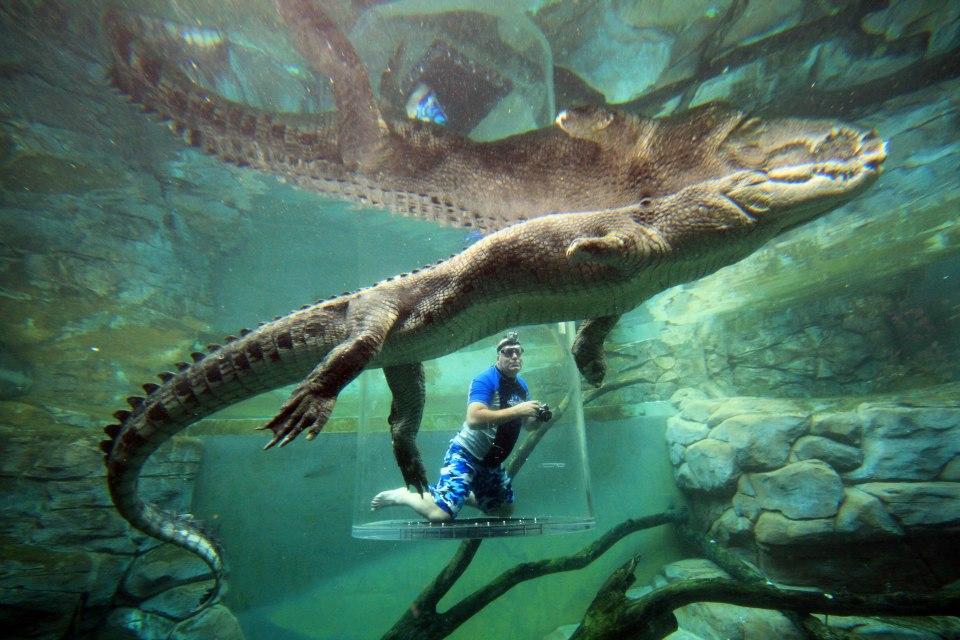 Cage aux crocodiles