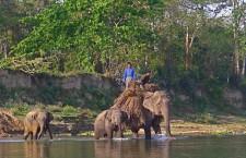 Le Parc National de Chitwan