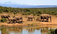 Voyager malin en Afrique du sud