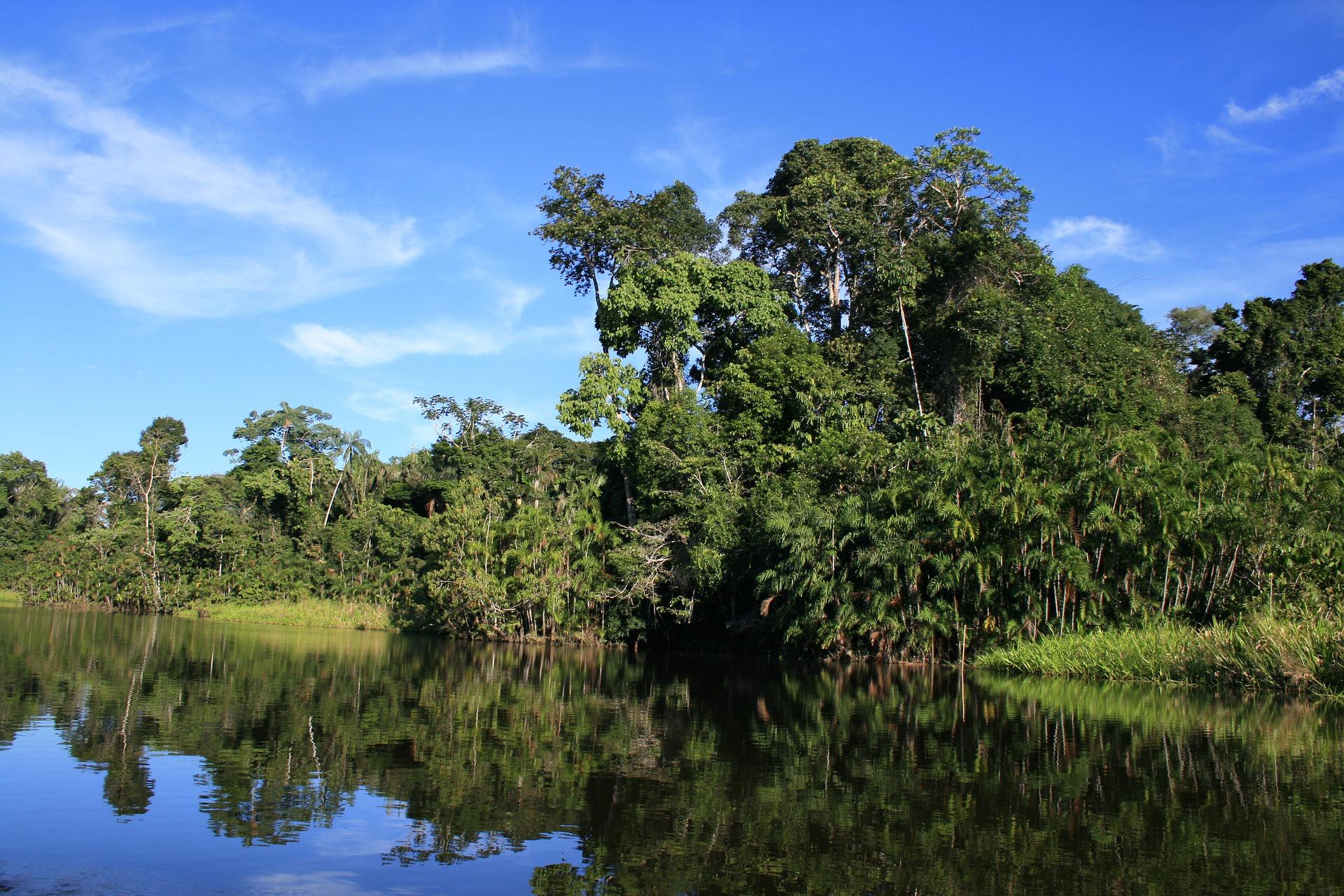 Forêt Amazonienne en Equateur.