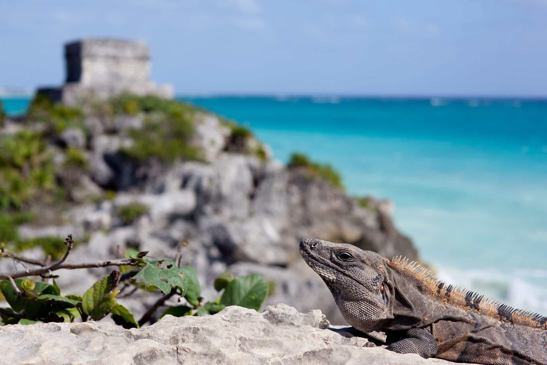 Iguane sur le site archéologique de Tulum au Yucatan.