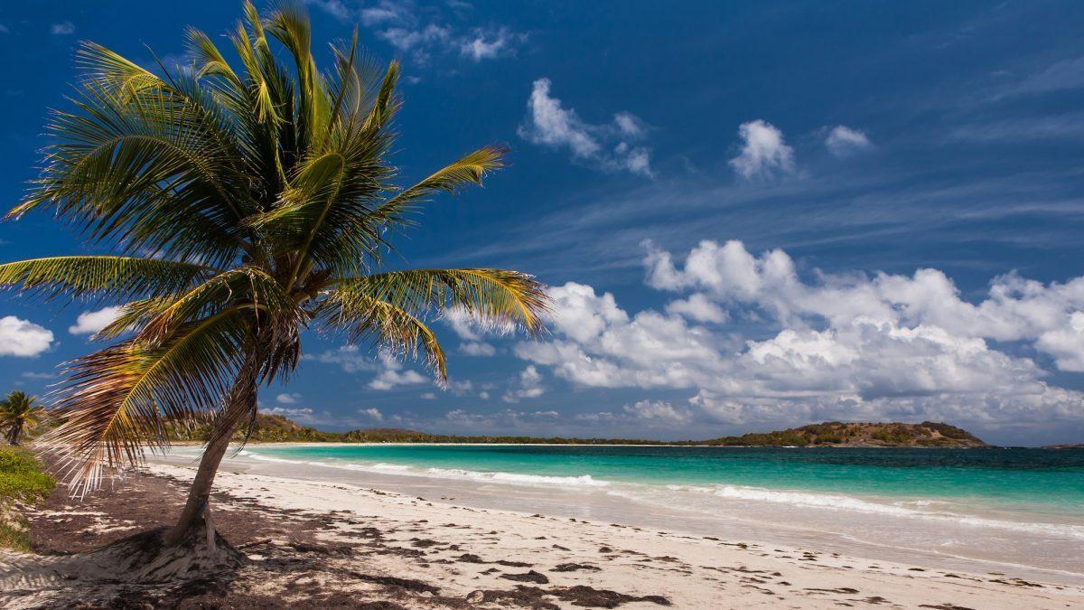 Magnifique et sauvage Anse Trabaud en Martinique