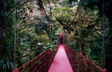 Pont supsendu dans la réserve de Monteverde Cloud Forest - Photo Mike Goren