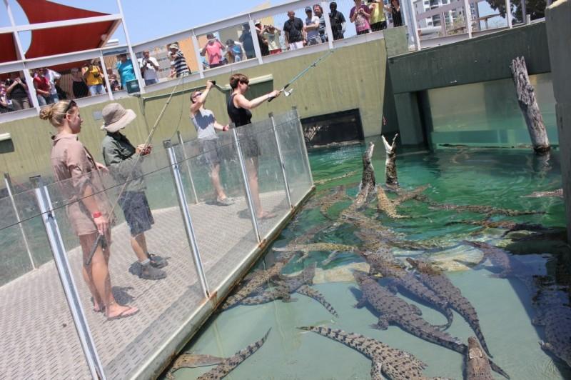 repas des crocodiles
